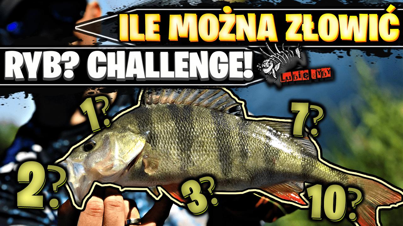 Ile można złowić ryb? Challenge !